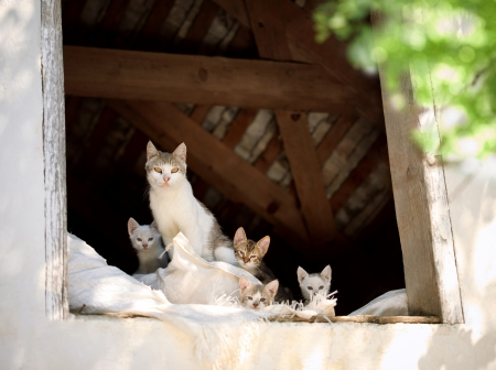happy cats family, cat and kittens