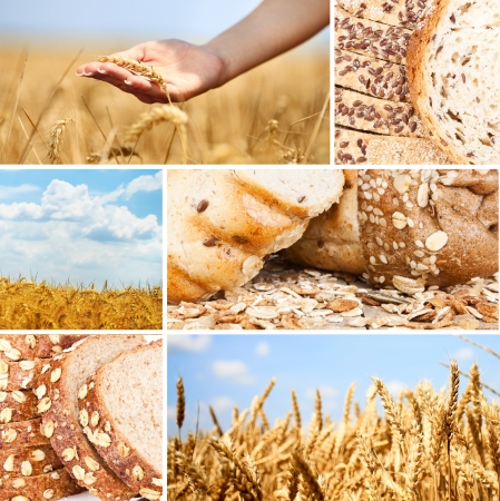 Collage of  wheat and bread photo