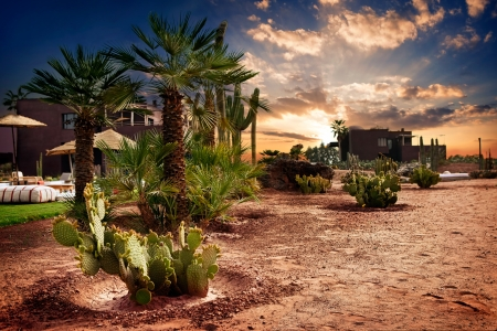 desert landscape:  Palm tree and cactus in Oasis in Morocco  Stock Photo