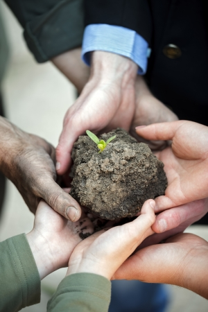 group of hands holding clod of earth with plant photo