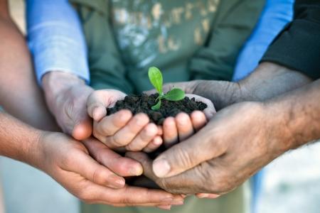 apoyo familiar: Joven planta verde en las manos, la conservaci�n del medio ambiente Foto de archivo