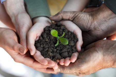 boeren familie handen houden een verse jonge plant, symbool van het nieuwe leven en behoud van het milieu