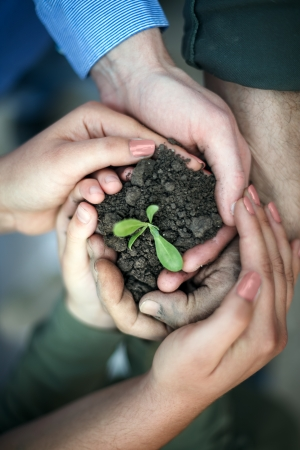 hands surround a new seedling, protecting our environment Фото со стока
