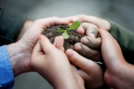 新鮮な若い植物を保持している農民の手。新しい生命と環境保全の概念
