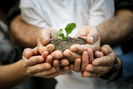 environmental protection:  Hands of farmers family holding a young plant in hands Stock Photo