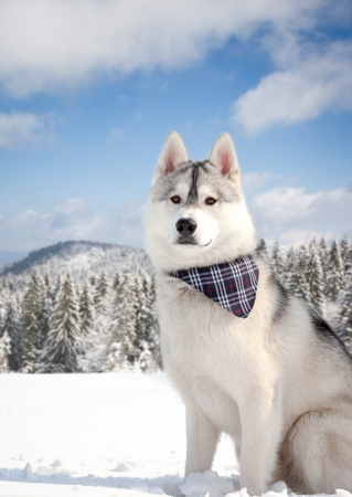 beautiful dog in snowy forest photo