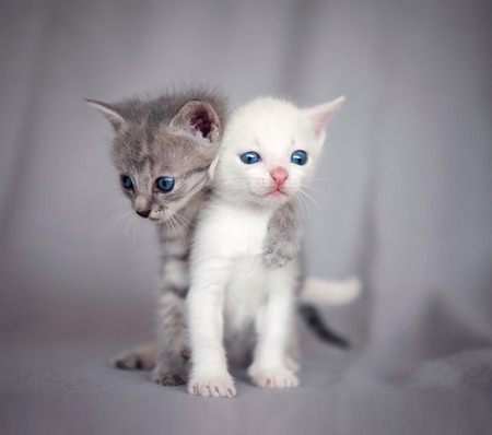 two kittens hugging  photo