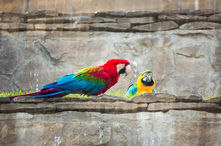 red beak:  Pair of parrot with red beak