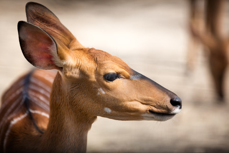 fawn: Portrait of bambi