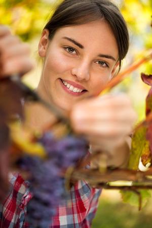 Young smiling girl working at vineyard, harvesting grape photo