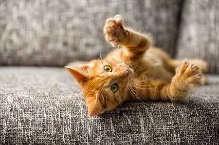 Kleine kat spelen op het bed Stockfoto