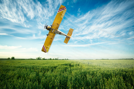 crop duster airplane flies low over a wheat field spraying fungicide and pesticide Stock Photo