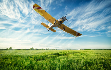 biplane: Agriculture, low flying yellow plane sprayed crops in the field