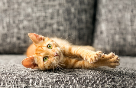 domestic cat playing Stock Photo