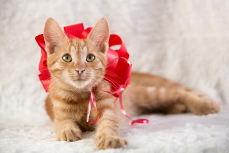 Beautiful red kitten like gift photo