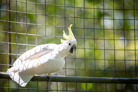 green parrot: beautiful white  parrot in a cage