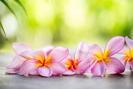 Tropical Frangipani on wooden table for spa and wellness concept Stock Photo