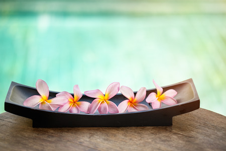 Beautiful tropical frangipani flower over blue background