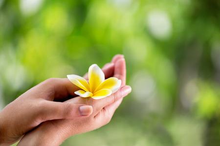 南国の花プルメリアを保持している女性の手のクローズ アップ