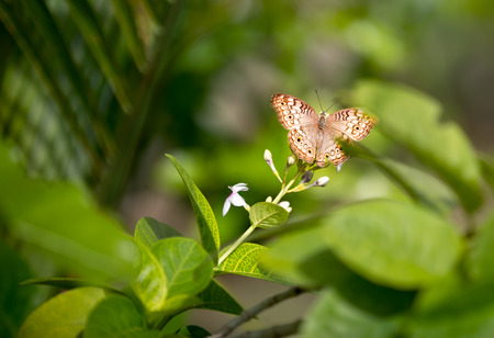 green nature: lovely butterfly over green nature background