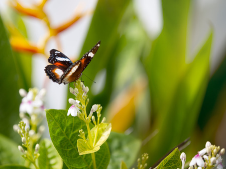 spotted flower: beautiful spotted purple butterfly on a flower