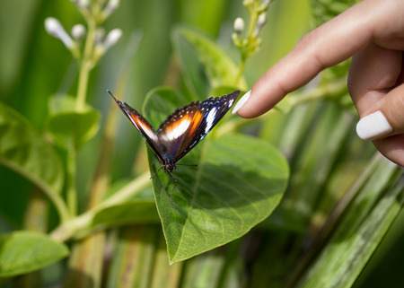 tame: tame butterfly allowed to touch it, enjoys pampering