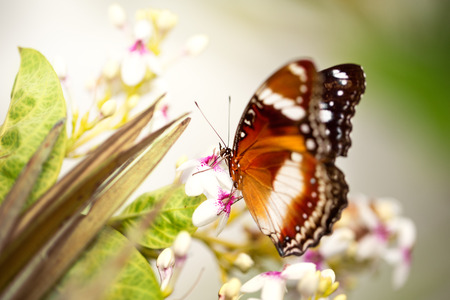 tame: tame butterfly, beautiful nature background Stock Photo