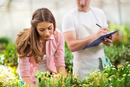 stocktaking: Young  colleagues doing inventory of plants, flowers and fruits in hothouse