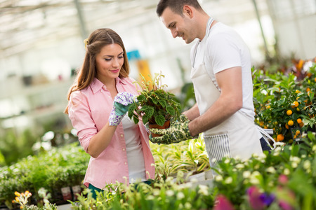 hothouse: Workers in process of tending a plant in hothouse Stock Photo