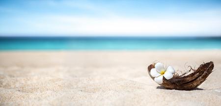 White frangipani flower in frangipani flower on beach Stock Photo