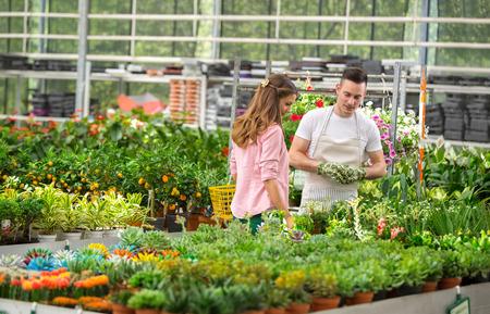 invernadero: El cliente y el reloj florister�a exhiben flores para la venta en un invernadero