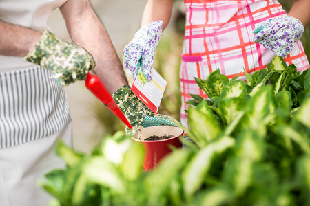 seedling: Two workers in a greenhouse sow flowers in a red flowerpot. Stock Photo