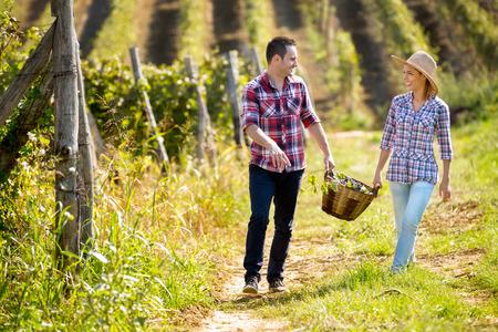 people together: Pareja feliz en gran viñedo en tiempo de cosecha