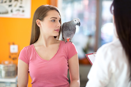 african grey parrot: Owner with her pet beautiful African gray parrot in veterinary clinic Stock Photo