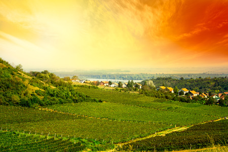 serbia: view to vineyard in Serbia