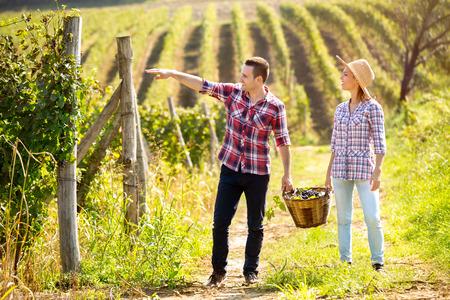 vineyard: Young couple walking in huge vineyard with full wicker basket