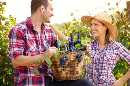 young happy couple: Couple of winegrowers holding full wicker basket in vineyard