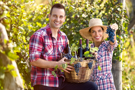 proudly: successful couple winegrower proudly show your wine and grapes