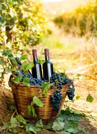 canastas con frutas: Botellas de vino tinto y uvas en cesta de mimbre