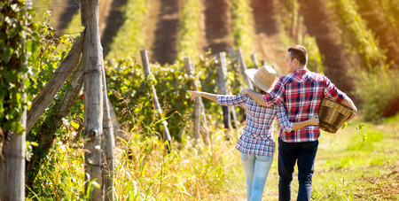 Couple walking in between rows of vines, back view