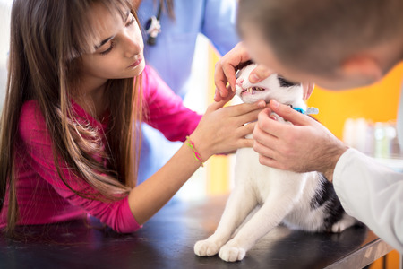 pet therapy: Vet specialist at work checking cats mouth and teeth in vet clinic Stock Photo