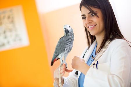 parrot tail: Beautiful veterinarian examining sick African grey parrot in vet clinic Stock Photo