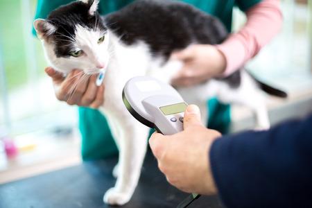 Vétérinaire identifier chat par micropuce Banque d'images
