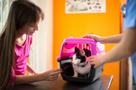ambulant: Scared sick cat in transporter with owner in vet ambulant Stock Photo