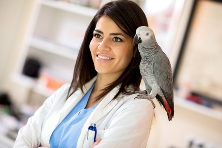 african grey parrot: Beautiful young veterinarian with African grey parrot on her shoulder Stock Photo