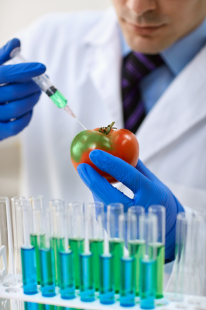 into: Scientist injecting GMO into a tomato for lab test