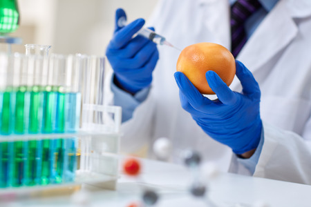 modifying: GMO experiment scientist injecting liquid into orange in agricultural research laboratory