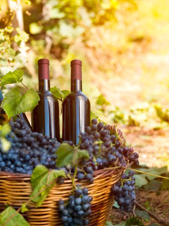 no label: wine bottles with no label in vineyard