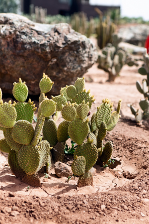 Detail of cactus growing in the desert Stock Photo