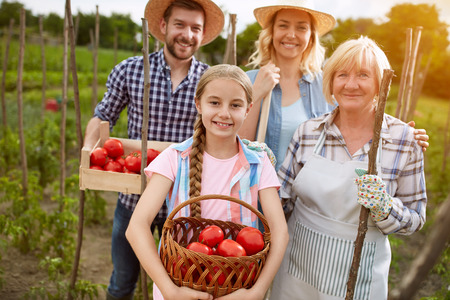 organically: Family farmers with organically produced tomatoes in garden